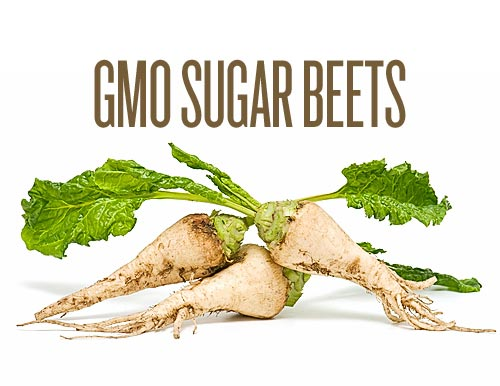 shocking-truth-find-out-which-food-is-genetically-modified-sugar-beet