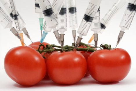 shocking-truth-find-out-which-food-is-genetically-modified-tomatoes