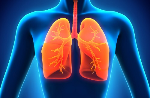 12-foods-plants-that-cleanse-your-lungs-and-heal-respiratory-infections