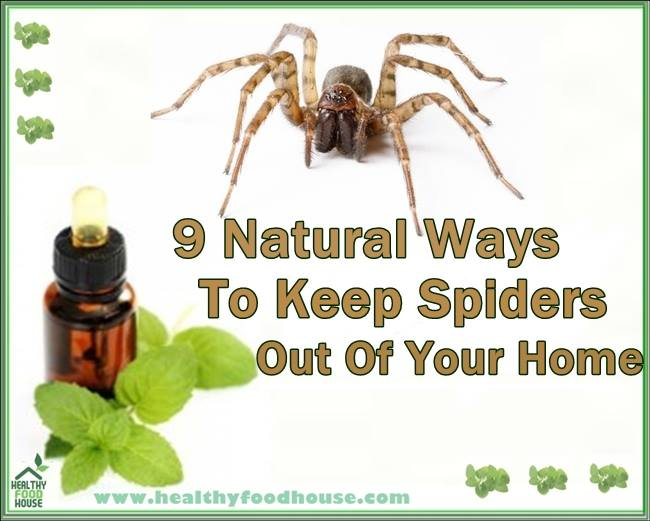 9 natural ways to keep spiders out of your home for How to keep spiders out of your house