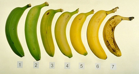 the-best-time-to-eat-a-banana-is-it-healthier-to-eat-a-banana-while-its-fresh-or-when-its-ripe