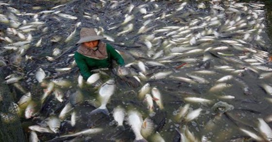 Image result for tilapia farms in China