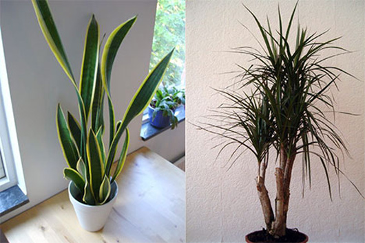 The Best 7 Indoor Plants That Purify The Air