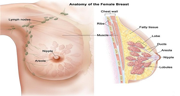 what-do-you-eat-only-two-servings-a-week-will-protect-you-from-breast-cancer