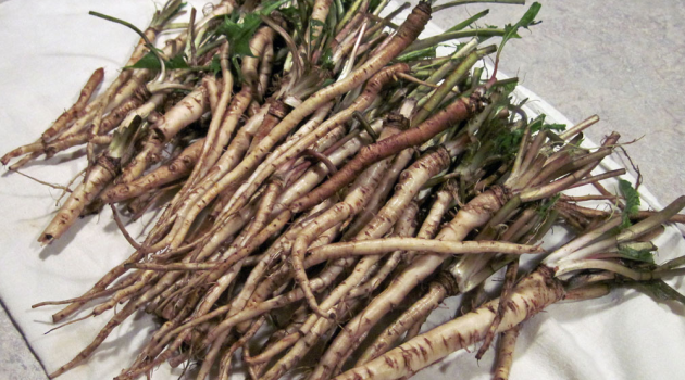 cancer-cells-decompose-after-several-weeks-with-the-use-of-this-herb