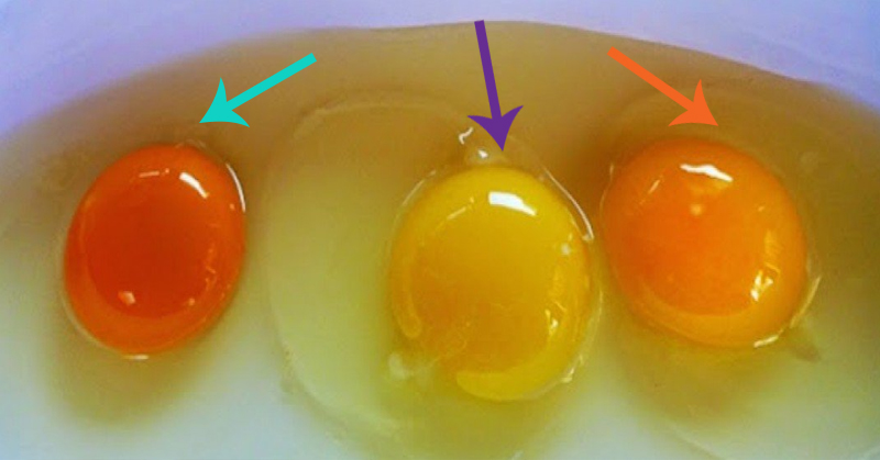 How to Tell If Your Eggs Came From a Sick Chicken (plus how to ...
