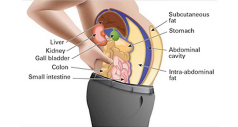 Image result for Toxins Stored In Your Fat Cells Are Making You Fat And Swollen. Here's How To Cleanse Them