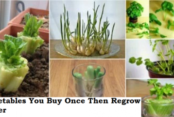 8-vegetables-you-buy-once-and-regrow-forever-how-to-grow-them-full-tips