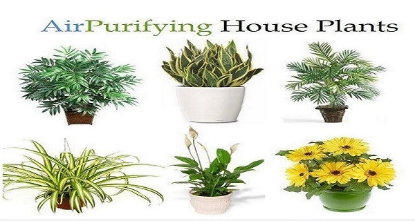 8 Impossible To Kill Plants That Clean The Air In Your Home