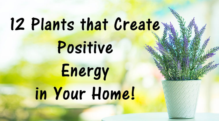 Enlightone: 12 Plants That Create Positive Energy In Your Home