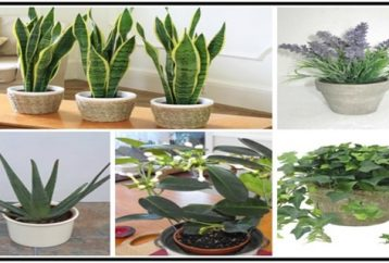 5-plants-bedroom-help-sleep-better-purify-air