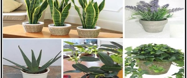 5-plants-bedroom-help-sleep-better-purify-air