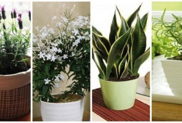 10-plants-bedroom-better-sleep-plants-emitting-oxygen-night