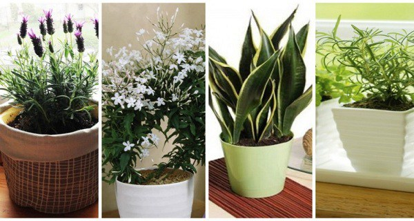 10 plants you should have in your bedroom for a better for Oxygen plants for home