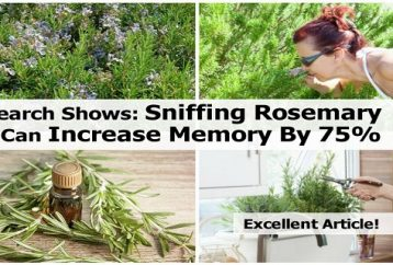 sniffing-rosemary-can-increase-memory-75