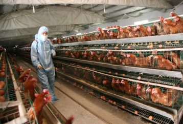 finally-fda-admits-chicken-meat-contains-cancer-causing-arsenic
