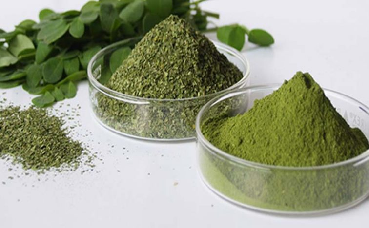 moringa-the-herb-that-treat-cancer-and-stops-diabetes