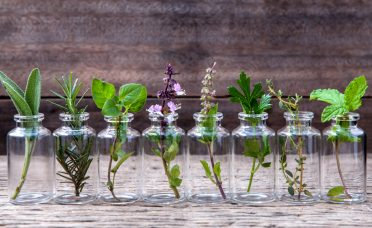 10-herbs-can-grow-indoors-water-year-long