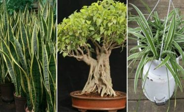 3-plants-that-generate-oxygen-even-at-night-get-one-for-your-bedroom