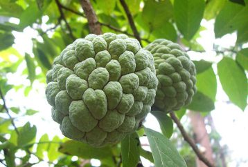 9-mind-blowing-reasons-need-sugar-apple