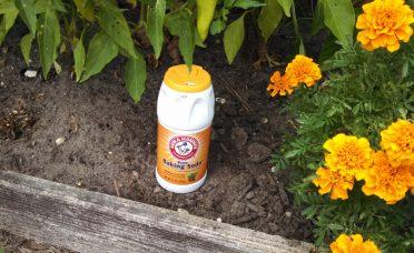 17-useful-hacks-use-baking-soda-garden