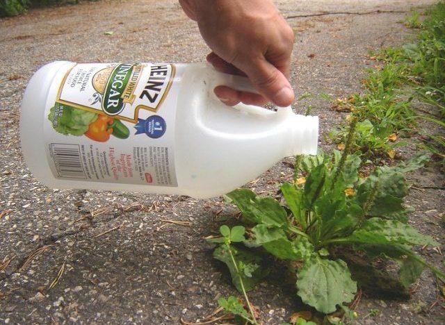 12-amazing-vinegar-uses-garden