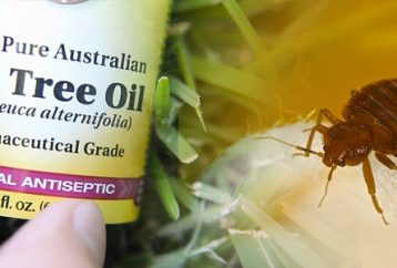 9-effective-ways-get-rid-every-single-bed-bug-without-using-single-chemical
