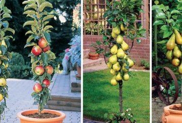 columnar-fruit-trees-create-city-orchard-amazing-dwarf-fruit-trees