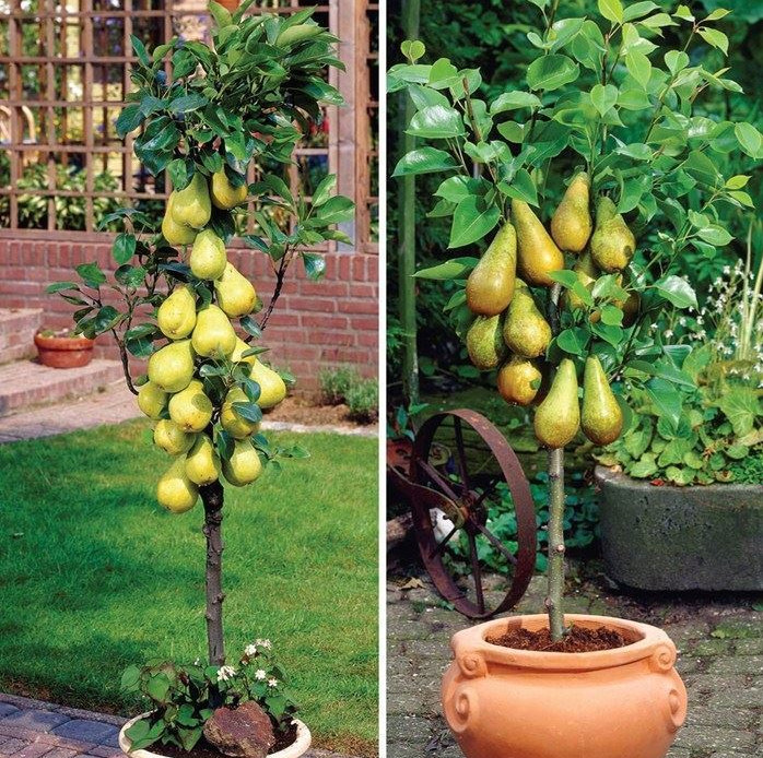 columnar fruit trees create your own city orchard with these, Natural flower
