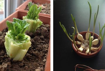 10-vegetables-can-buy-regrow-forever