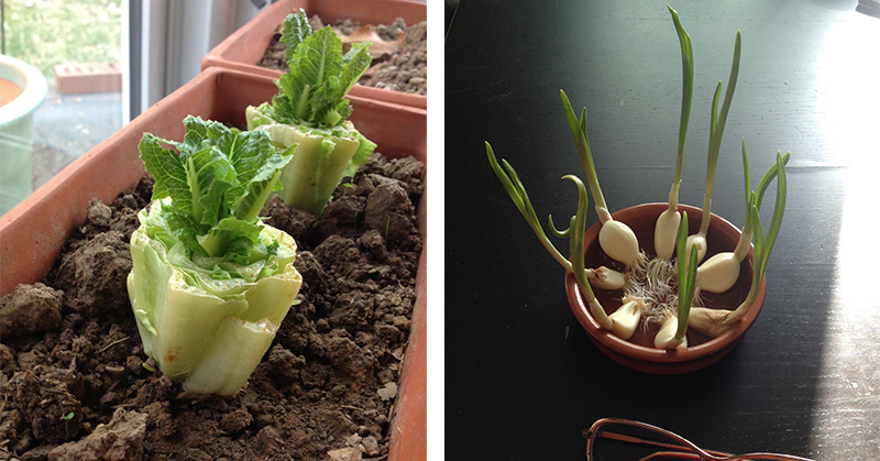10 Vegetables You Can Buy Once And Regrow Forever!