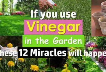 discover-can-use-vinegar-garden