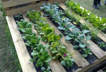 grow-organic-food-pallet-gardening-answer