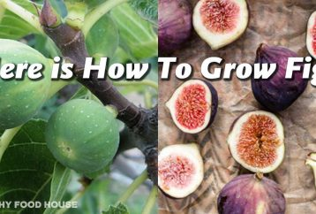 here-is-how-to-grow-figs-1