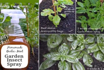 make-homemade-garden-insect-spray-keep-bugs-bay