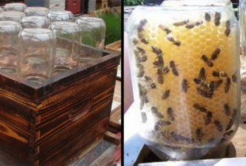 guy-invented-homemade-beehive-save-bees-going-viral