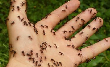 spray-simple-mixture-will-never-see-ants-home