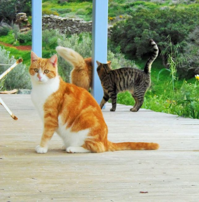 Cat Sanctuary Seeks Caretaker To Live On A Beautiful Greek Island With 55 Cats