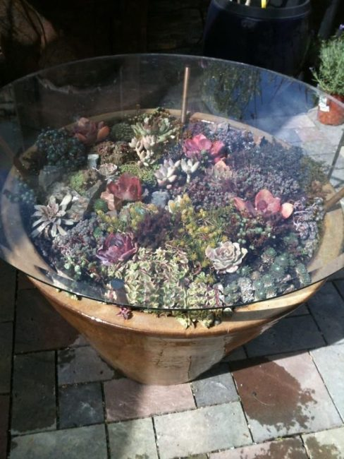 Square glass table with a lot of succulents below the top