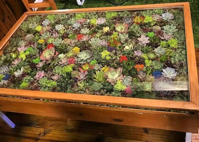 Patio round glass table with succulents