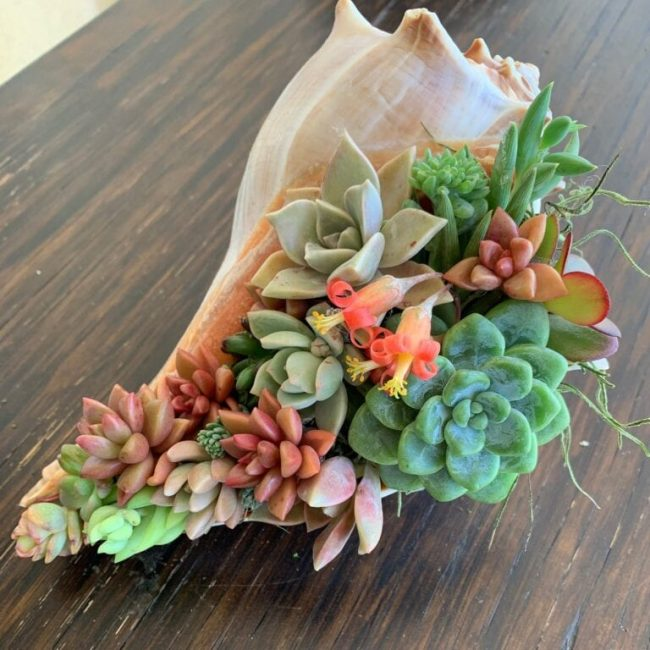 Succulent planted inside of a seashell