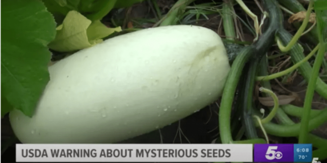 Plant that grew from the seeds delivered from China