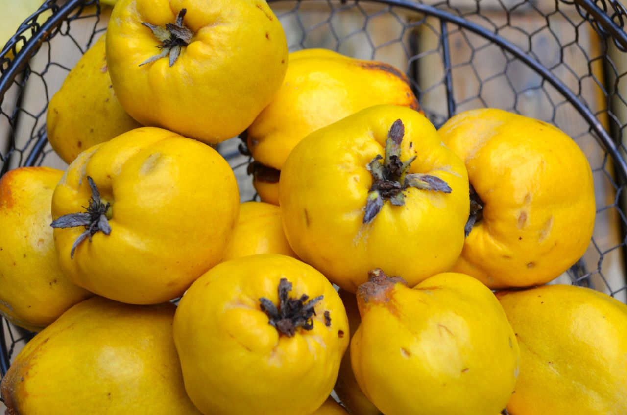 Quince Real Natural Remedy