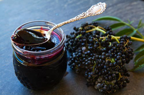 elderberry-the-most-antiviral-fruit-known-to-man