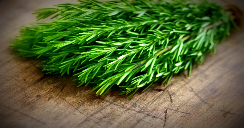 Rosemary Wonder Herb That Fights Fatigue While Energizing
