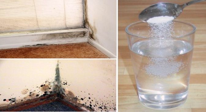 how to get rid of mold on outside of house