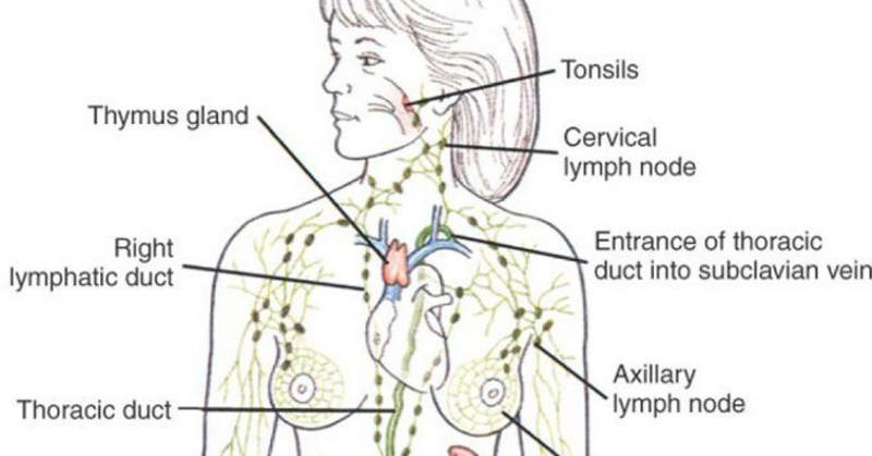 16 Signs It S Time To Drain Your Lymph Fluids Healthy