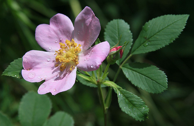 10 Plants Native Americans Used To Cure Everything And