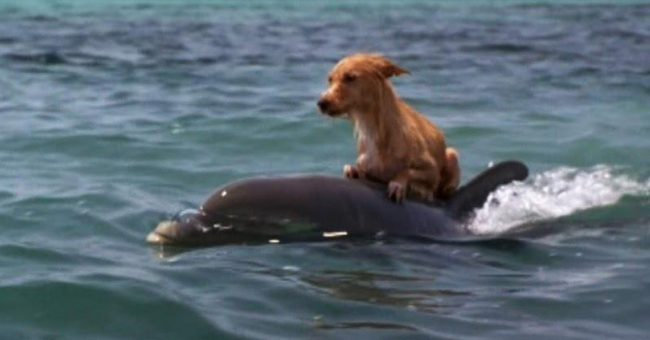 Dog Falls Into Canal And Starts To Drown, Until The Group of Dolphins Comes To Saves Him